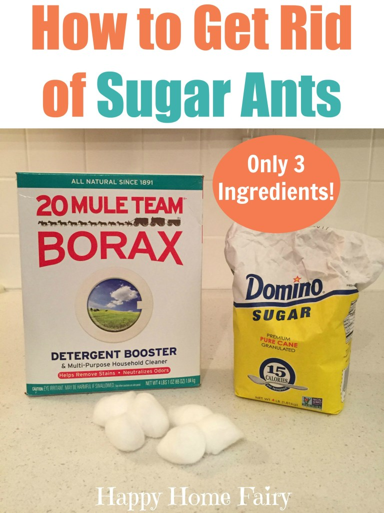 How To Get Rid Of Sugar Ants With Just 3 Ingredients Happy Home Fairy,What Do Cats Like To Do With Humans