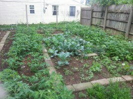 Mid June garden
