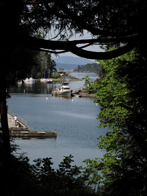 Looking through the Lookout cut in the trees so we can see Butchart Cove