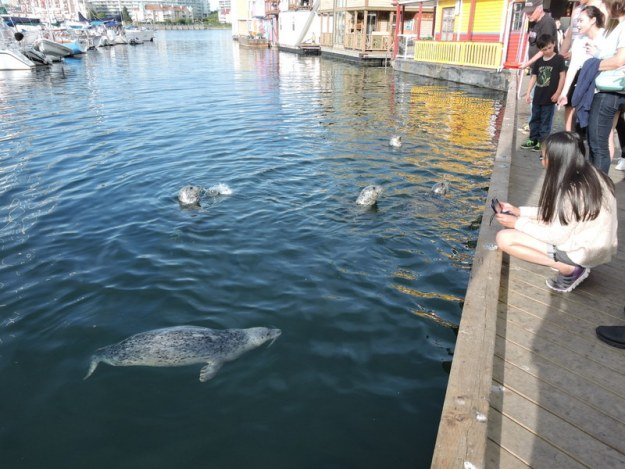 Tourists feed the HARBOR SEALS at Fisherman's Wharf (they buy raw fish at The Fish Store)
