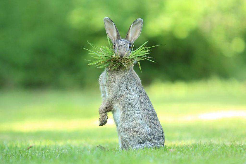 nejvtipnějších fotek zvířat