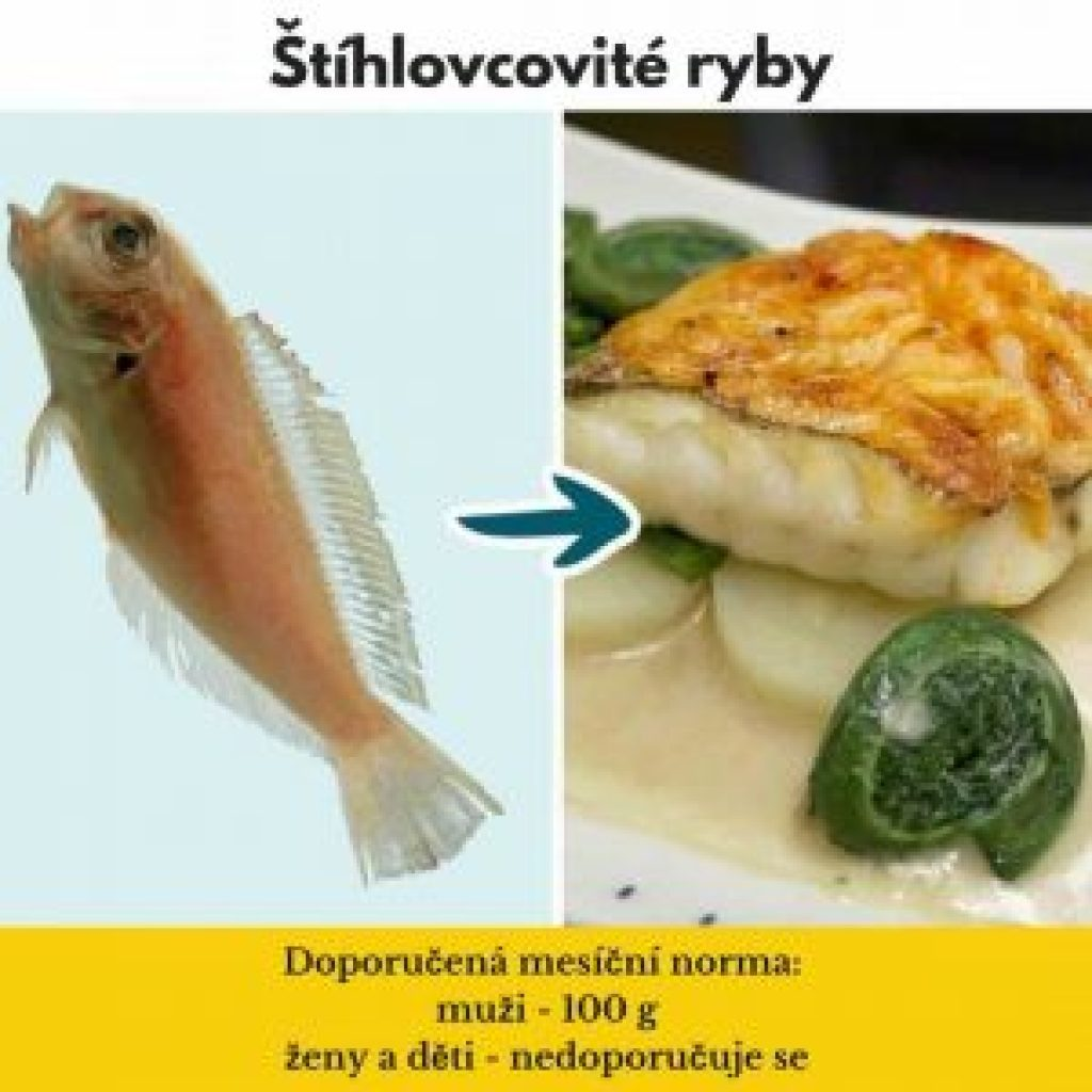 druhy ryb