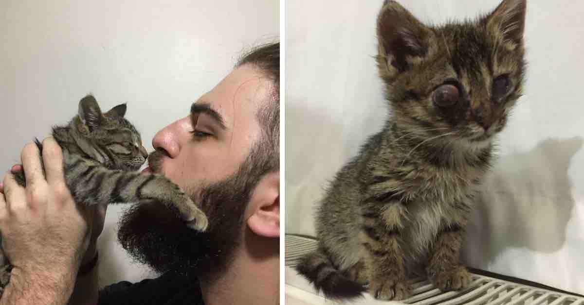 Dojemné! Muž našel kotě bez oka a udělal všechno pro to, aby přežilo