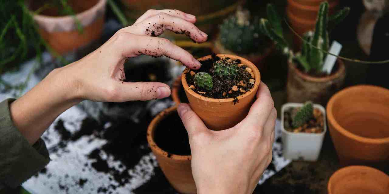 10 nápadů na zahradní dekorace, které si vyrobíte sami