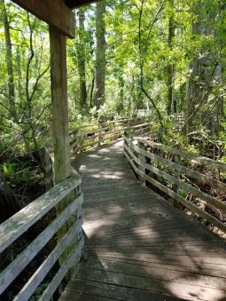 Naples FL top Nature Preserve is Corkscrew Swamp Sanctuary. This family attraction in Naples is sure to be loved by both kids and parents. View birds, crocodiles, turtles and more while learning all about a swamp habitat in southwest Florida. Walk the lovely boradwalk and enjoy your emergence into nature.