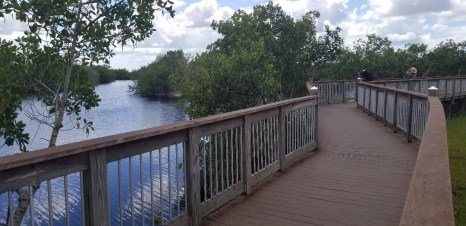 Big Cypress National Preserve is a free attraction located near Naples Florida and the Everglades. It's a great place to see nature and alligators.