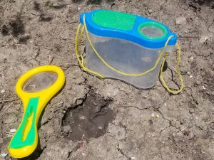 Fun Outdoor activity for kids finding bugs and studying them in your bug catcher.