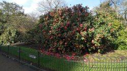 Londres - Kensington Gardens10