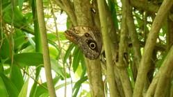papillon_camouflage