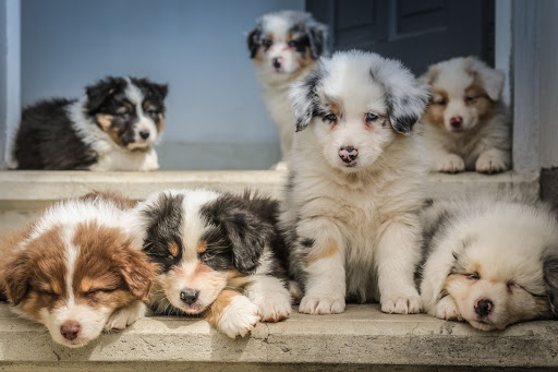 puppies tips