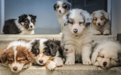 Things To Know When Getting a Puppy