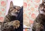 16-Year-Old Cat Lost His only Home, Tells His New Family How Happy He is to be Loved Again