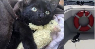 Deputy Saves Drowning Kitten Clinging to Oysters Under Bridge