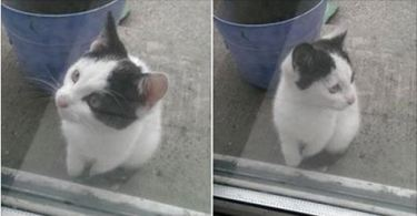 Injured Kitten Finds Home, By Wandering Into a Garden.