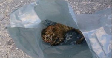 She Found An Abandoned Kitten Inside A Trash Bag, And What She Did Next Brought Me To Tears.