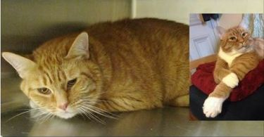 Woman Takes a Chance on a Sad Shelter Cat, a Few Days After Adoption..