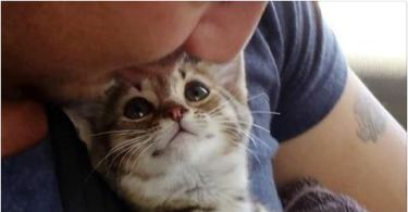 You Have To See This Kitten's Face When He Gets A Forever Home!