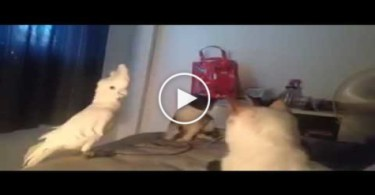 MEOWING Parrot Wants To Be Friends With Group Of Cats, BUT Watch What Happens NEXT...