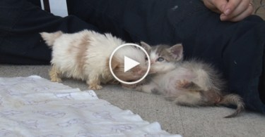 Sweetest Rescue Kitty And Puppy Are Best Buddies