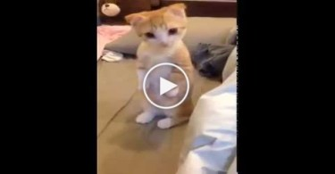 Tiny Adorable Kitty Waiting Calmly For His Bed Get Clean