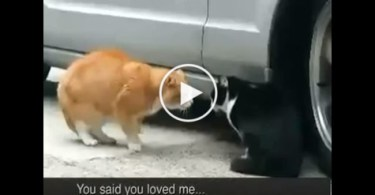 Angry Cats Having a Serious Conversation. LOL, Hilarious..