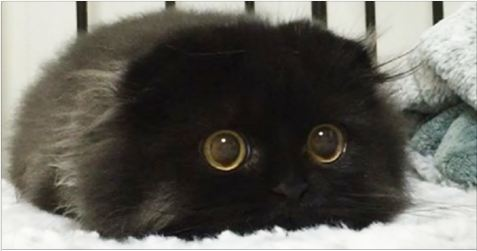 This Black Fluff Ball Has The Most Amazing Eyes