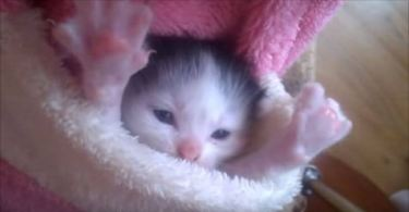 Tiny Kitty Perfectly Fits In a Pocket. Cuteness Overloaded !!!