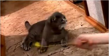 This Kitten Was Playing... Watch Her HILARIOUS Reaction When She Heard The Doorbell