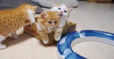 Mom Cat Hugging Her Precious Kittens. So Adorable
