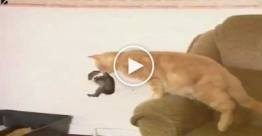 Kind Cat Adopts Tiny Sweet Baby Rabbit