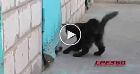 Brave Cat Rescues A Puppy Trapped Behind Old Door