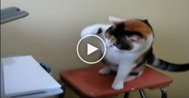 Angry Cat Fights Printer. LOL. You Have To See..