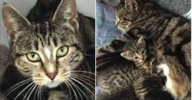 A Mom Cat Snuck Into a Vet Clinic To Be With Her Abandoned Kitties