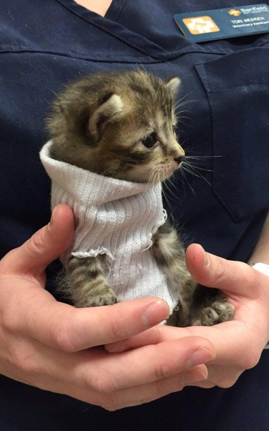 Kitten Saved From Hurricane Matthew Gets Tiny Jumper Made Of Sock