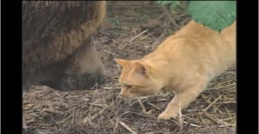 An Unlikely Friendship With Little Cat And Grizzly