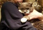 Cat Mysteriously Missing for 3 Years, Finally Reunited With Her Owner
