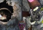 Firefighters Rescue Kitty Stuck in Dryer Vent