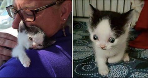 No One Wanted This Wonderful Kitty And The Reason Why Will Break Your Heart