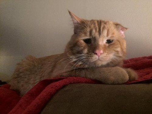 saddest cat adopted