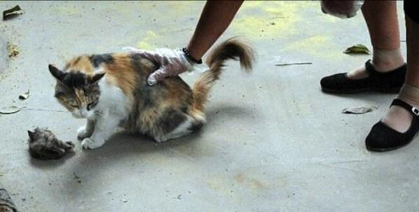 stabbed kittens
