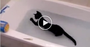 Crazy Black Kitten Loves Playing In The Water. Unbelievable Video !