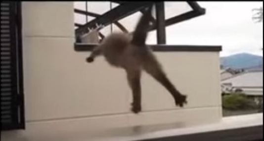 Fat Cat Tries To Jump, But.... The Biggest Fail EVER ! Hilarious Video !
