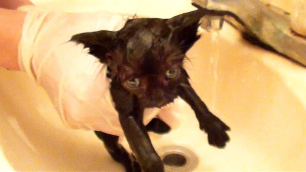 Little Black Kitty`s First Bath. Adorable Moment !