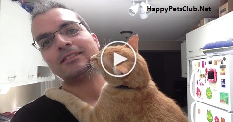 Cat Hugging His Human Is the Sweetest Thing You Will See This Day