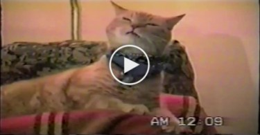 Kitty Shakes Head In the Rhythm Of The Music. Just Amazing !