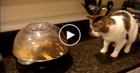 Cute Cat Terrorized by Popcorn Machine. She Tried to Stay Brave, But ... Watch NOW !