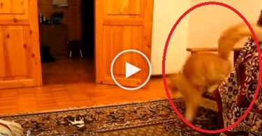 Cute Cat Scared Of Jump Sound of Mario The Game. Watch Now !