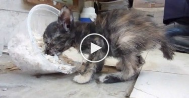 Rescued Poor Kitten Feels Love For The First Time. Incredible Video !