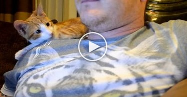 This Cute Kitty Really Likes Human. Heartwarming Video !