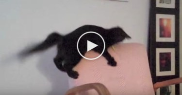 Kitty Panics When She Loses Her Favorite Toy. Incredible Video !
